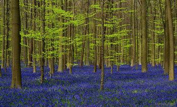 Gambar Hutan Terindah di Dunia 4