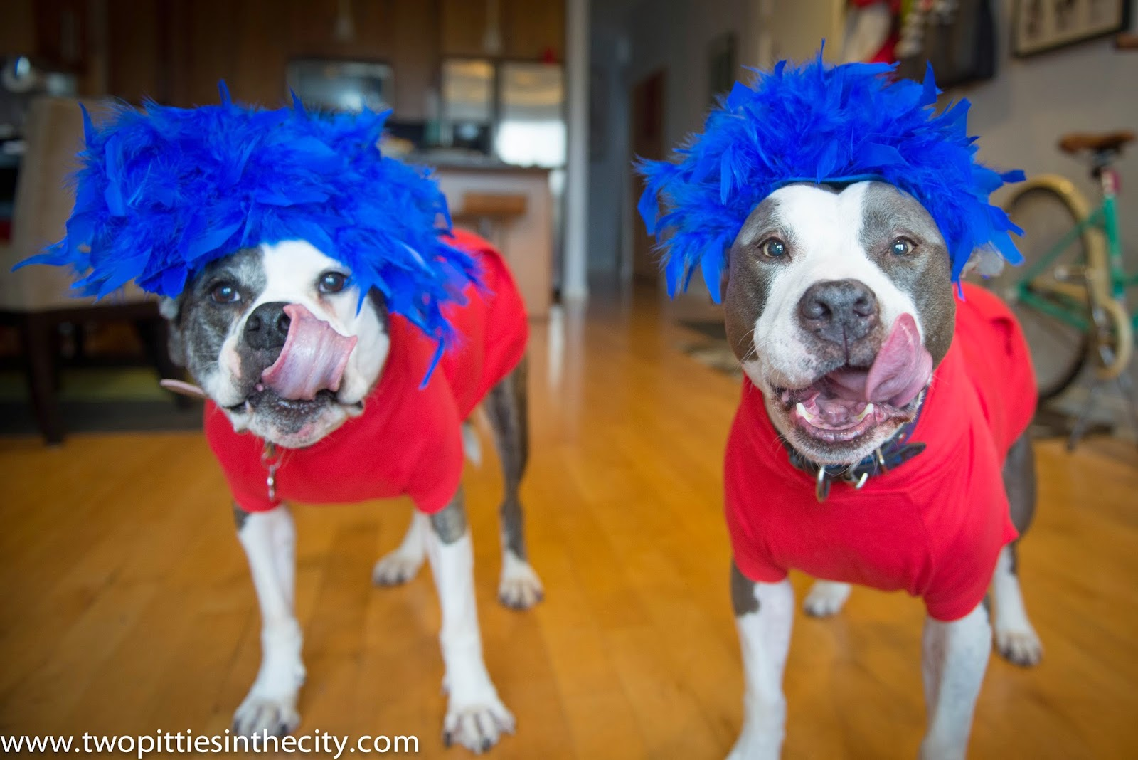 Two Pitties in the City: DoggyStyle: On Last Minute Dog ...