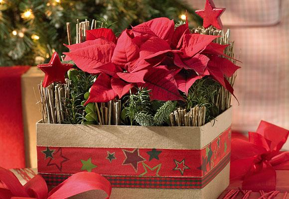 en esta otra idea vamos a introducir suculentas y flores de pascua para crear un elegante centro de mesa para navidad un gran bandeja con forma de copa