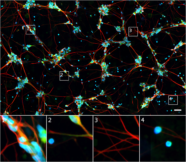 Seeing More with In Silico Labeling of Microscopy Images