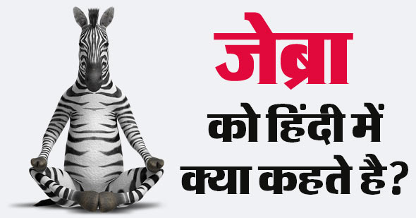 What is the name of Zebra in Hindi