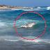 «ΠΑΓΩΣΕ» ολόκληρη η Κρήτη με αυτό που ξέβρασε η θάλασσα - Σκληρές εικόνες