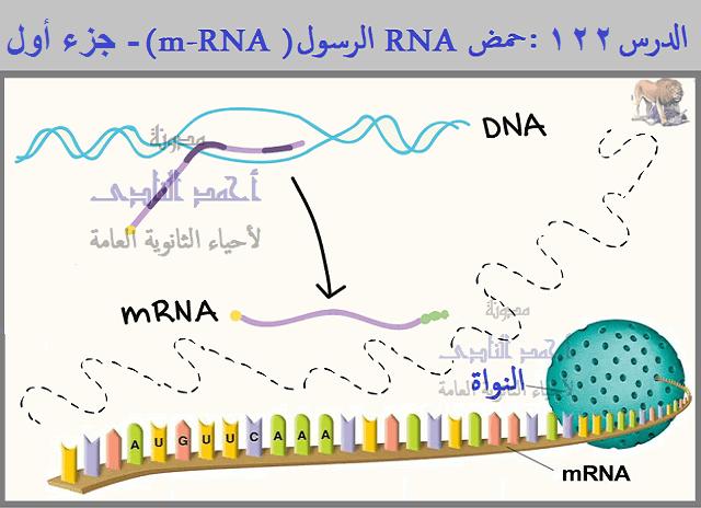 m-RNA  الرسول – الثالث الثانوى