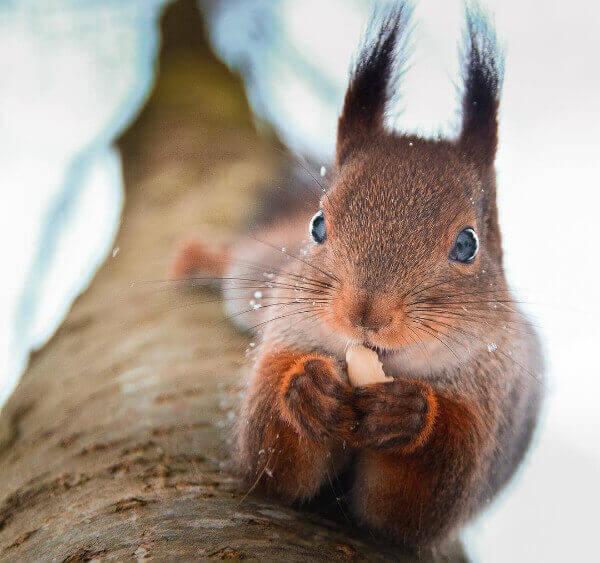 Fotografía Animales Naturaleza