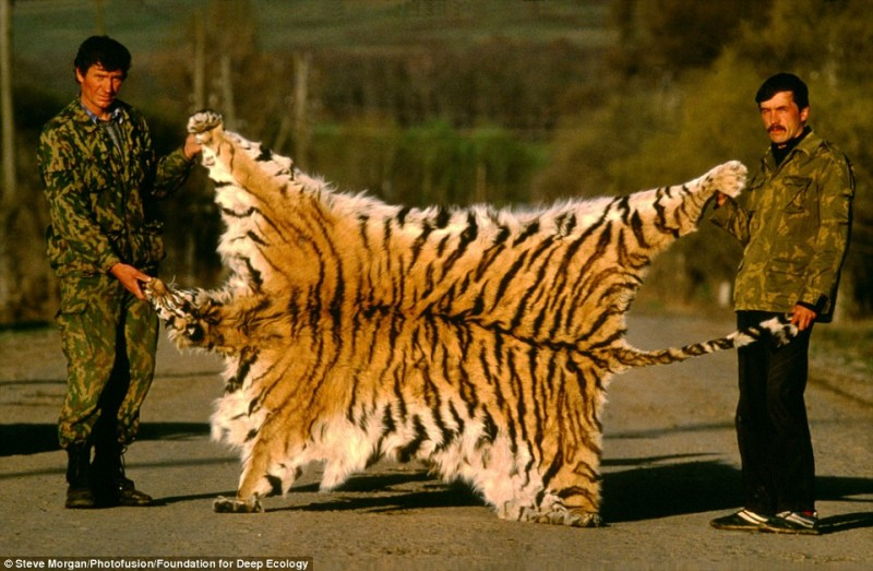 20 Pictures That Prove That Humanity Is In Danger - Poachers pose proudly with the coat of a Siberian tiger