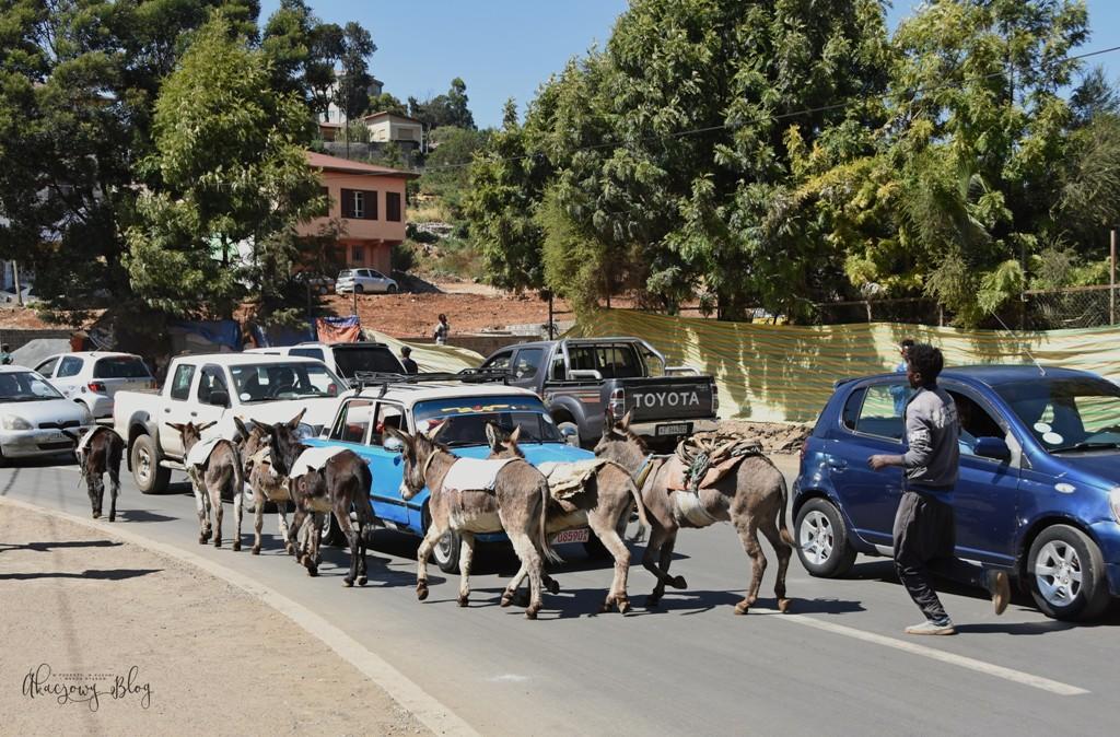 Podróż po Etiopii - cz. 2 - Addis Abeba.