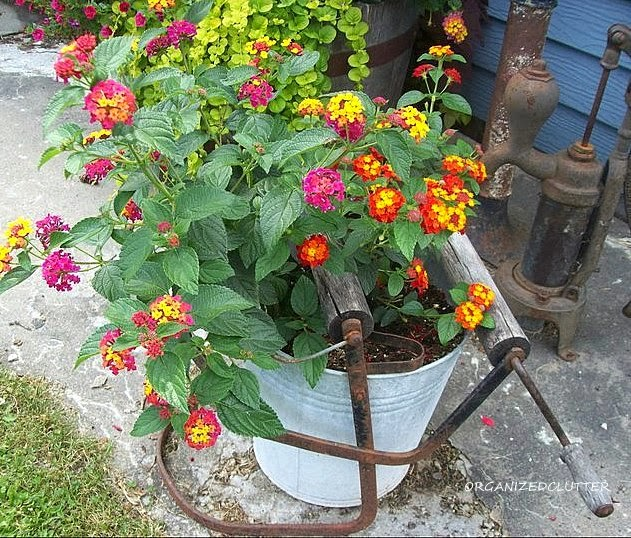Buckets and Pails as Planters in the Junk Garden