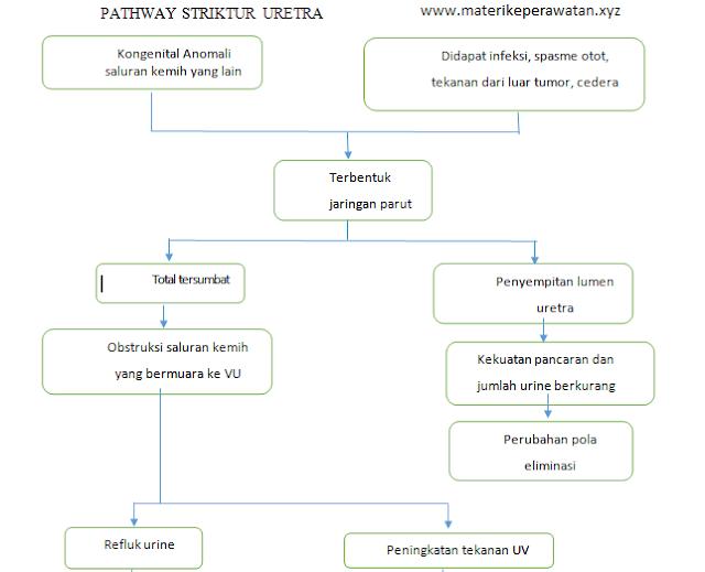 Catatan Singkat Perawat: Asuhan Keperawatan dan Path Way Striktur Uretra