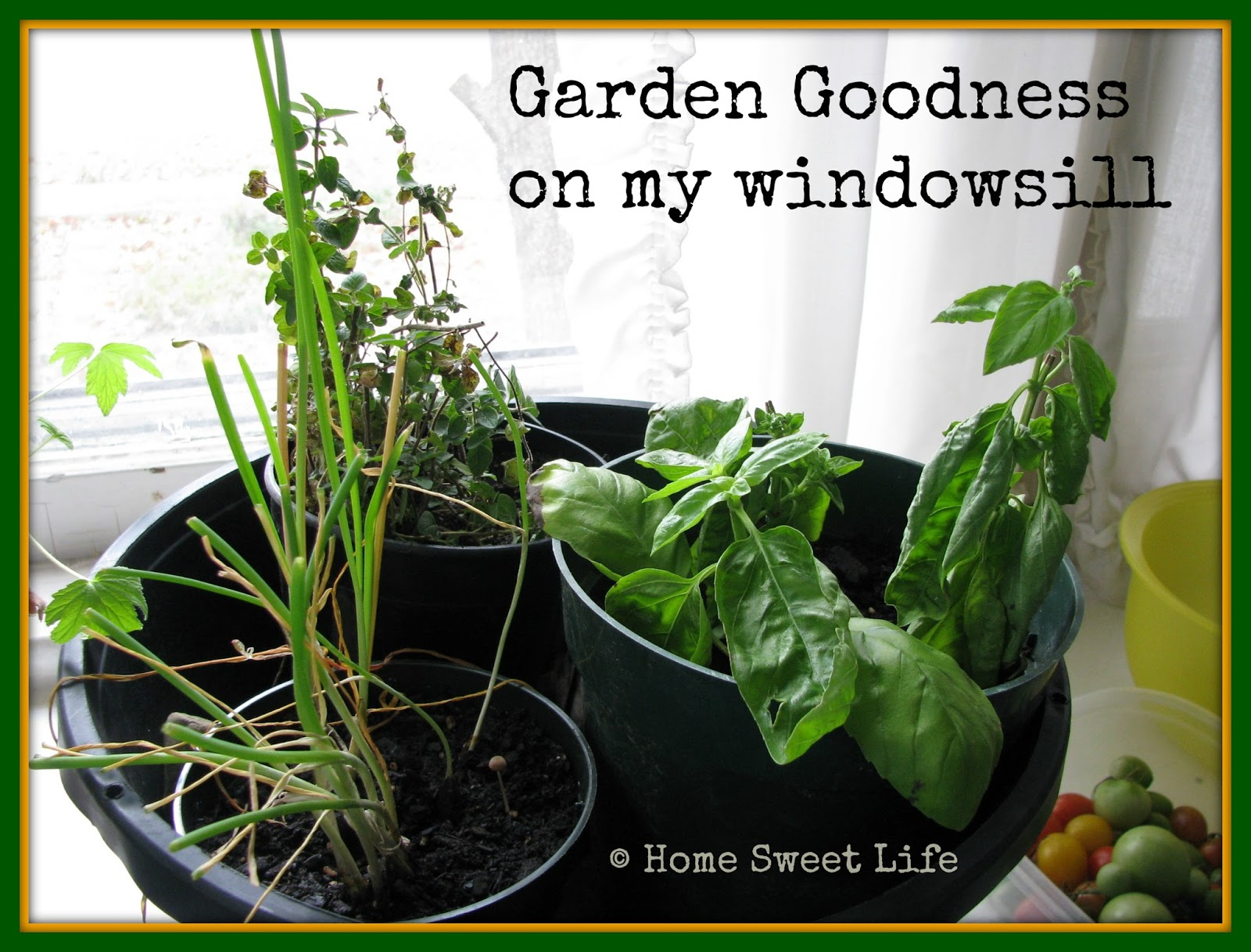 winter gardens, indoor gardening