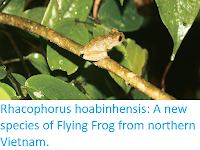 http://sciencythoughts.blogspot.co.uk/2018/02/rhacophorus-hoabinhensis-new-species-of.html