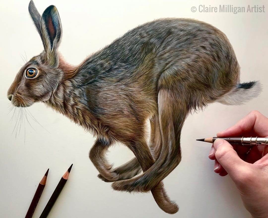 04-Harrington-the-Hare-Claire-Milligan-Realistic-Color-Pencil-Animal-Portraits-www-designstack-co