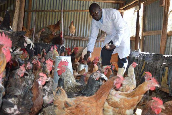 How I make millions from my 2,000 chickens | THINK BIG:You can also