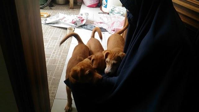 Mengenal Hesti, Wanita Bercadar yang Pelihara 11 Anjing