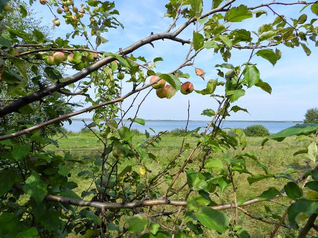Яблоня на фоне озера Малые Касли