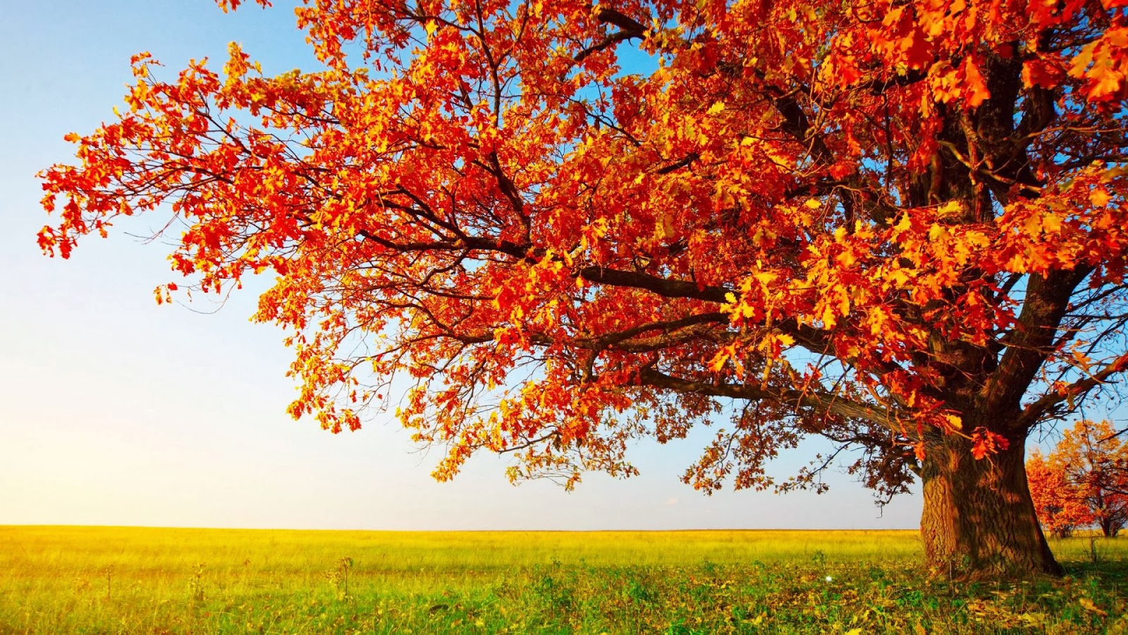 HD Wallpapers 1080p Nature autumn - Mobile wallpapers