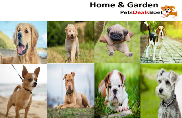 Dogs Breed