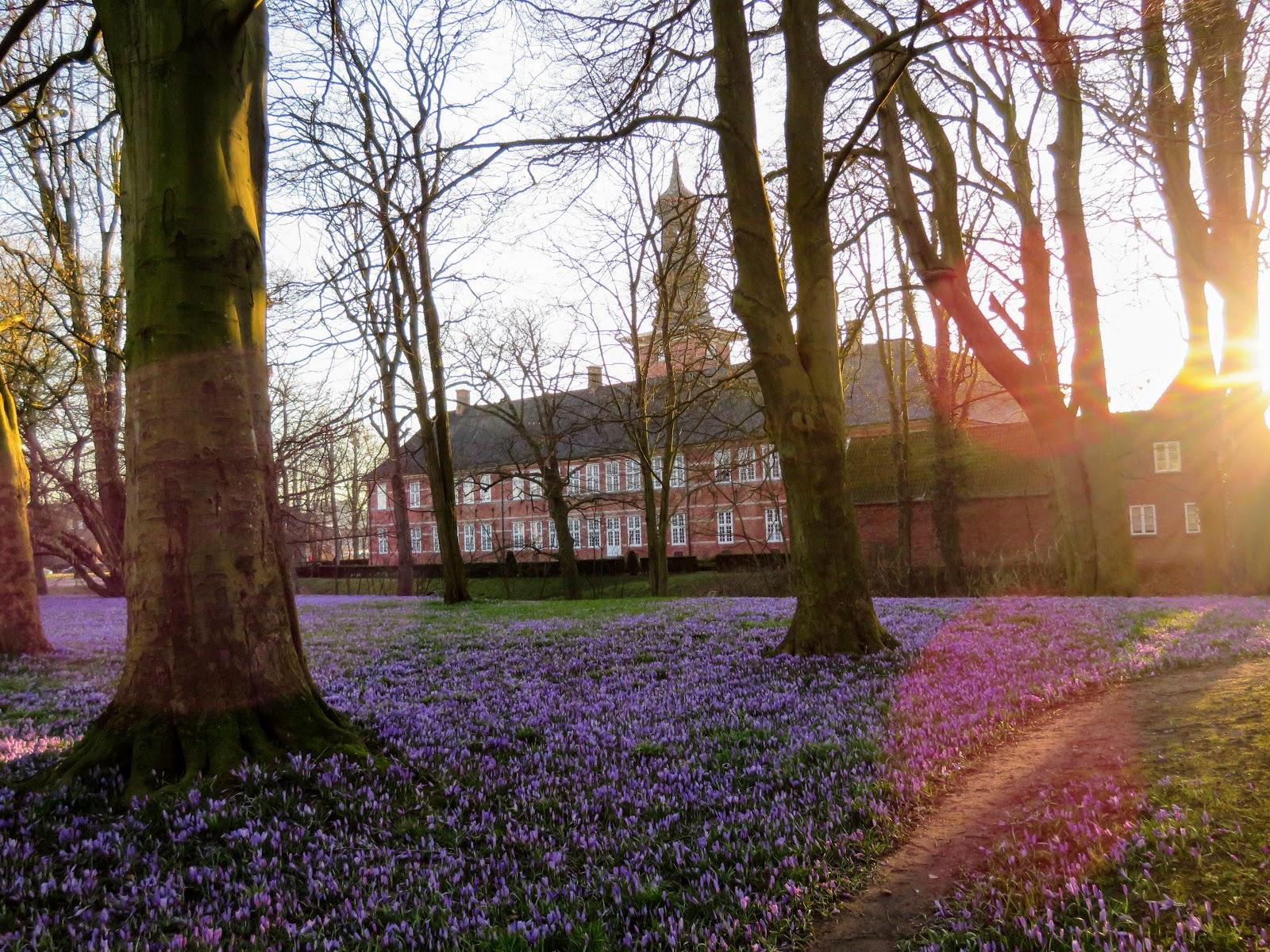 Ferienwohnung Sonne; Krokusblüte im Schloßpark Husum
