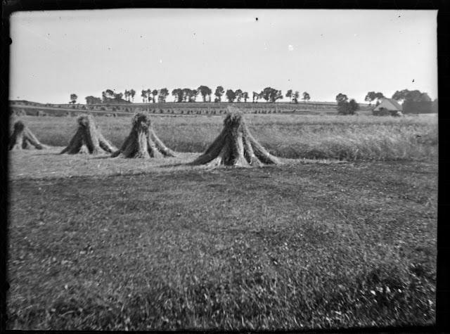 Einige Getreidegarben - Getreideernte vor Einführung des Getreidemähers - um 1910-1920