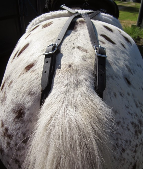 Endurance Granny: Fitting The Crupper From Two Horse Tack
