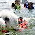 Δεν είναι όλοι οι σκύλοι κολυμβητές!....