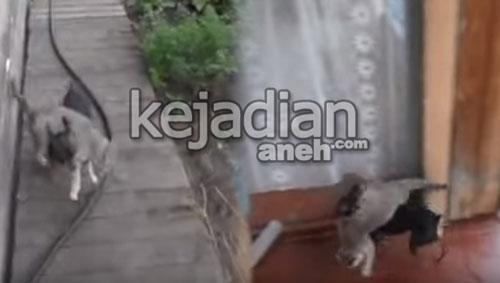 anjing menggendong kucing