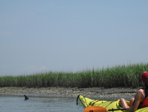 Kayaking Folly Beach The Best Beaches In World