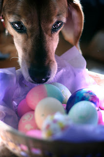 eggs as treats for pets