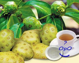 Opo - Manfaat buah mengkudu untuk kesehatan
