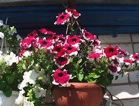 Цветы Добра