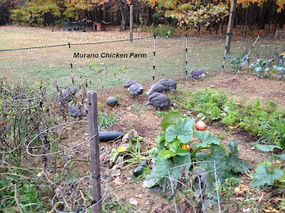 Guineas helping to clean up the garden in fall