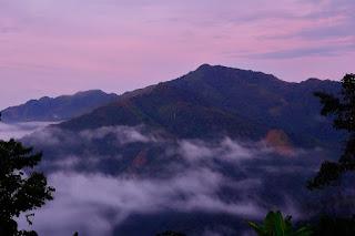 Guadualones. Foto: D.C.