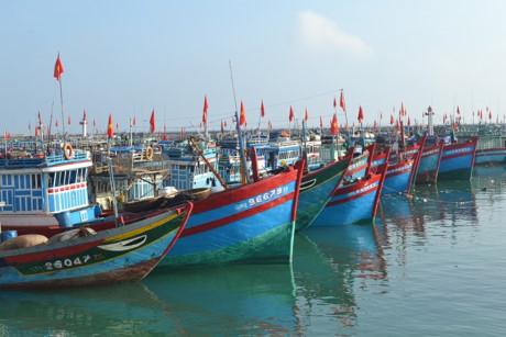 Hàng trăm tàu cá của ngư dân Lý Sơn không thể ra khơi sau Tết vì biển động.