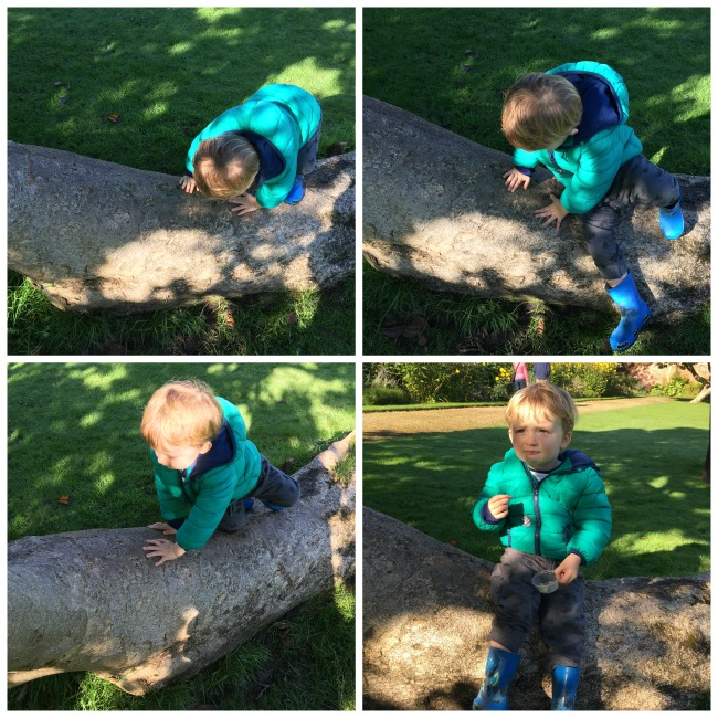 Birthday-boy-toddler-climbing-onto-log