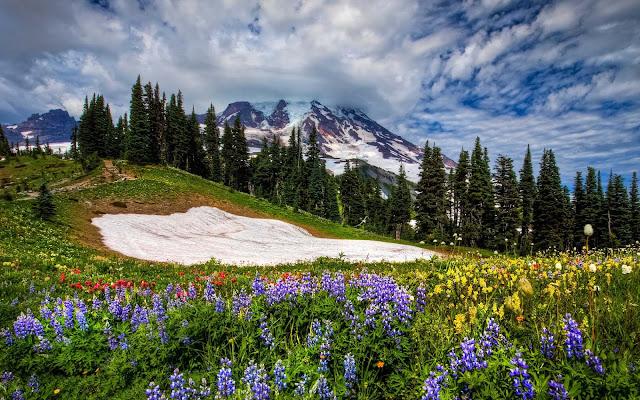 De lente komt eraan in de bergen met allemaal gekleurde bloemen
