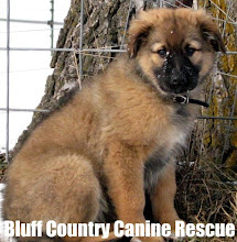 BLUFF COUNTRY CANINE RESCUE