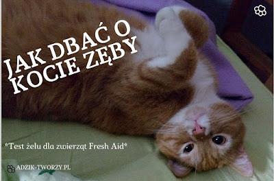 Jak dbać o kocie zęby + test żelu Fresh Aid dla zwierząt od ScanVet