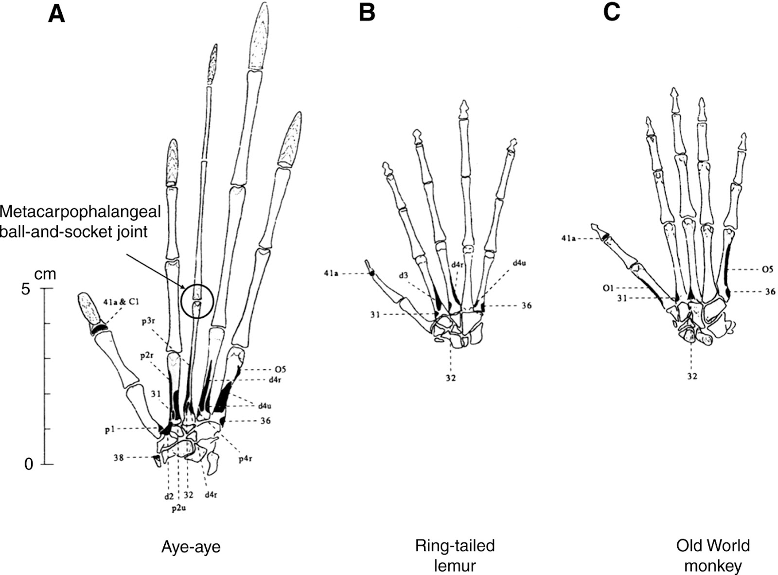 Evolutionary Vertebrate Zoology Evolu Ni Specialisti Na