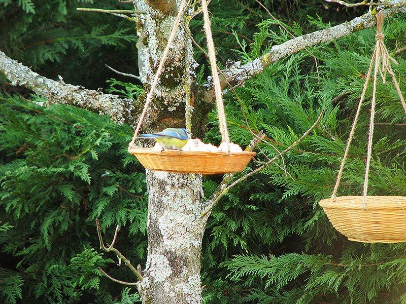 mangeoires recyclees pour les oiseaux recettes bio green lifestyle. Black Bedroom Furniture Sets. Home Design Ideas