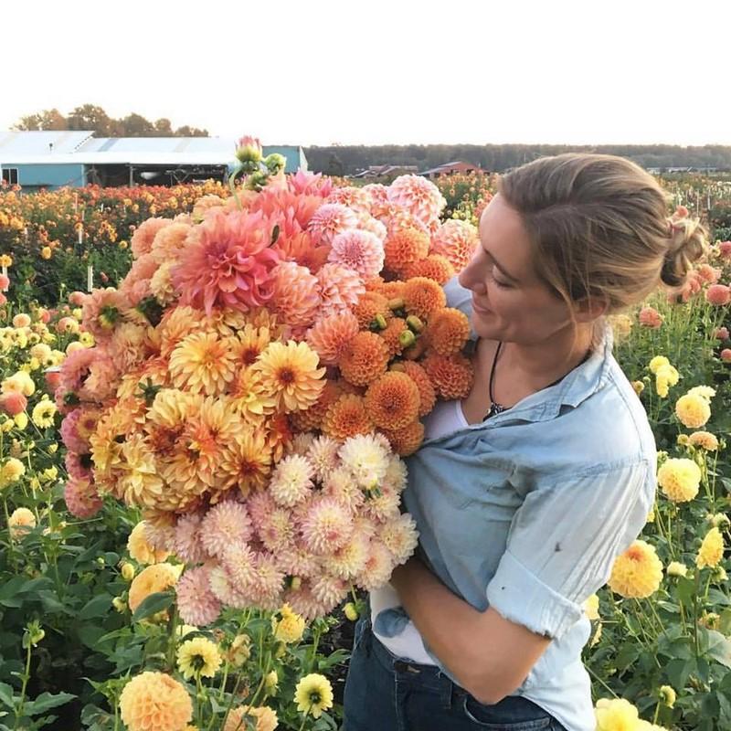 Cultivando Flores E Ilusiones Cut Flower Garden Nuevo Libro De Floret Farm