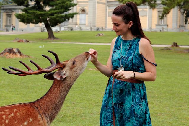 Lena dando de comer a los ciervos de Nara