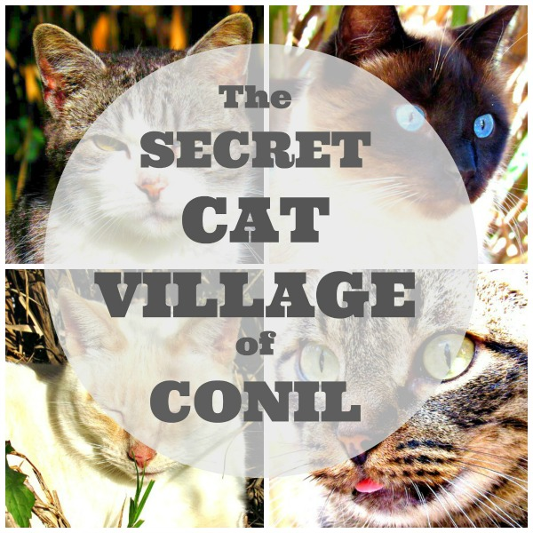 secret cat village of conil