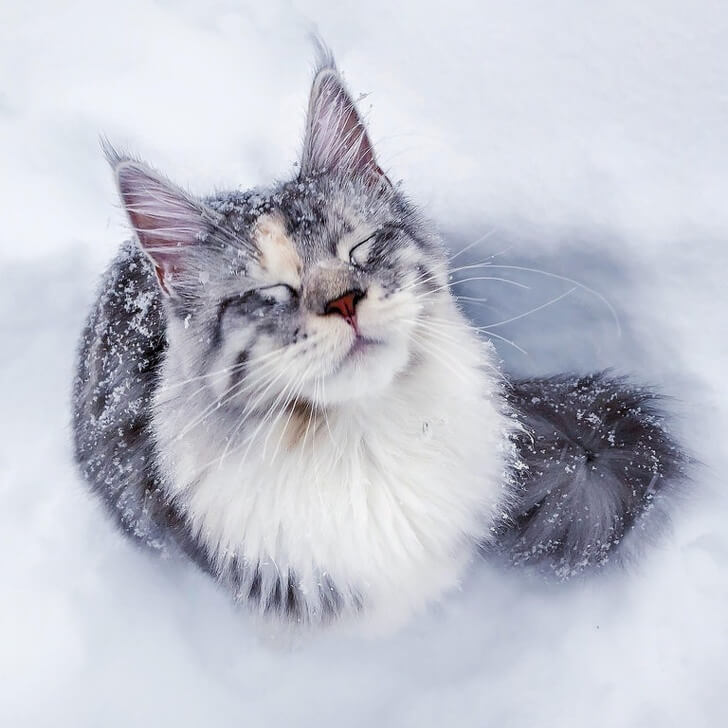 21 Cute Pictures Of Animals That Can Make Even The Worst Day A Bit Better - This Maine coon is having a blissful moment.