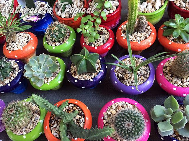Otra imagen de exposición de venta de plantas suculentas