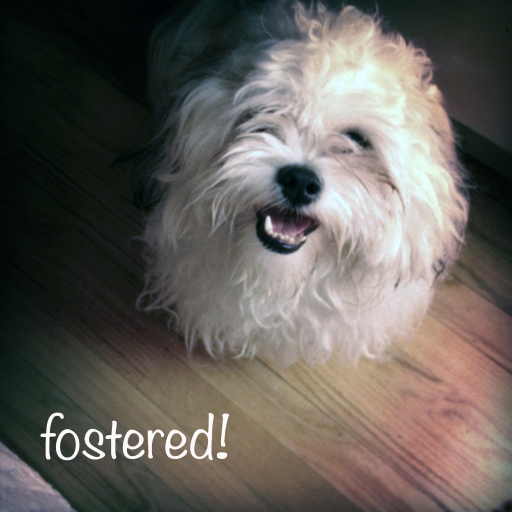 foster-pets-sick-owners html in ysazyxu github com | source