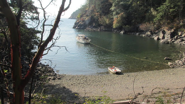 Lummi Island anchor cove campground