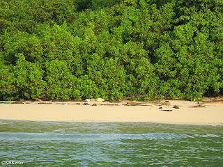 sandy beach, Gulf of Panama