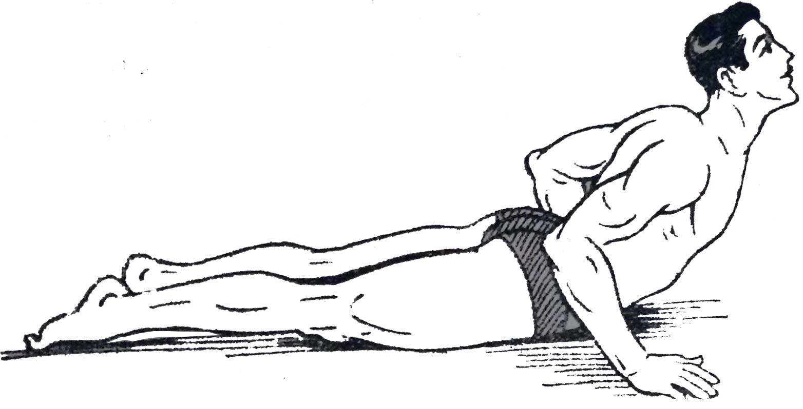 Bhujangasan Or Cobra Pose