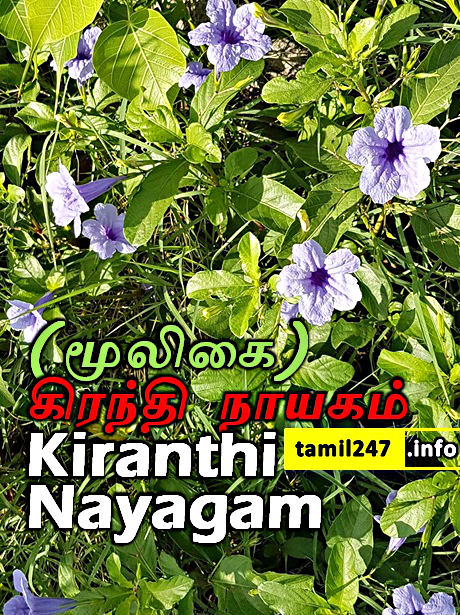 Kiranthi Nayagam mooligai sedi Eppadi irukkum, Payangal, Maruthuva kunangal. கிரந்தி நாயகம் மூலிகை செடி - Medicinal Plants in tamil with pictures, Herbal Plants and its uses in Tamil