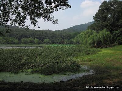 Pipa Lake in Nanjing