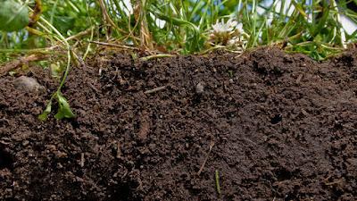 Conoce y mejora la calidad del suelo